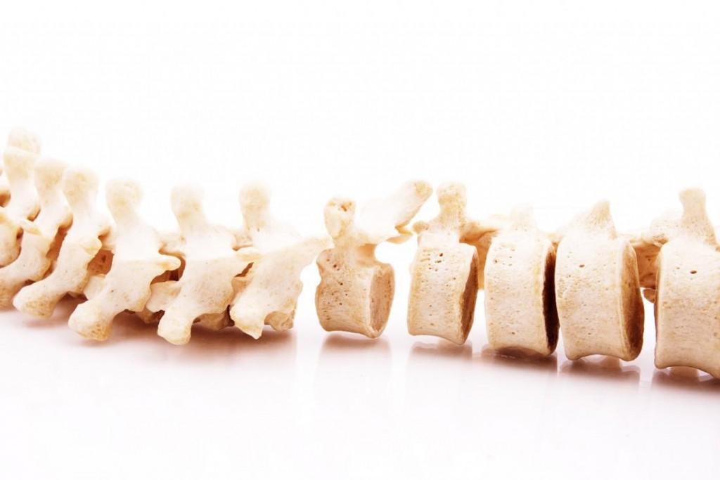 model-of-the-vertebrae-in-the-spine